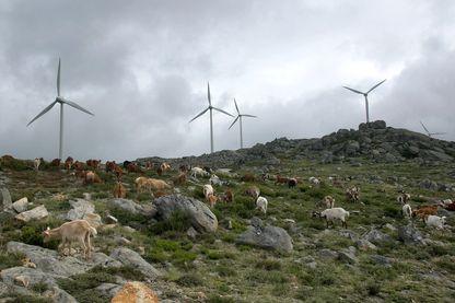 """SIIF énergie, entreprise française, et sa """"ferme"""" d'éolienne à Cabril au Portugal - 2003"""
