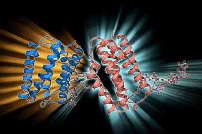 Molécule bêta d'interféron humain a des effets anti-inflammatoires et est utilisé pour traiter la sclérose en plaques