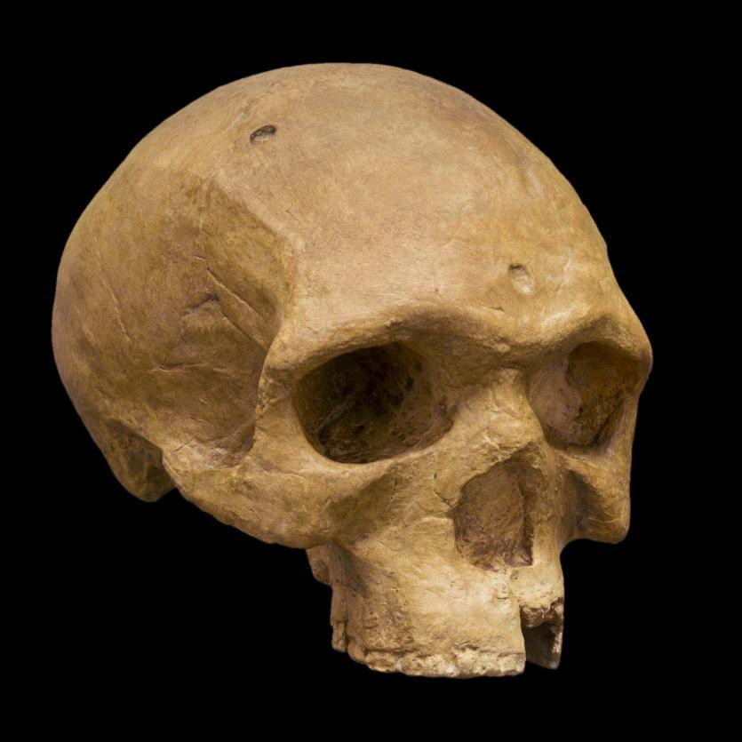 Le crâne de l'homme de Florisbad découvert en 1932 près de Bloemfontein en Afrique du Sud : 260 000 ans d'ancienneté, des caractéristiques et pratiques assez similaires à l'homme de Djebel Irhoud