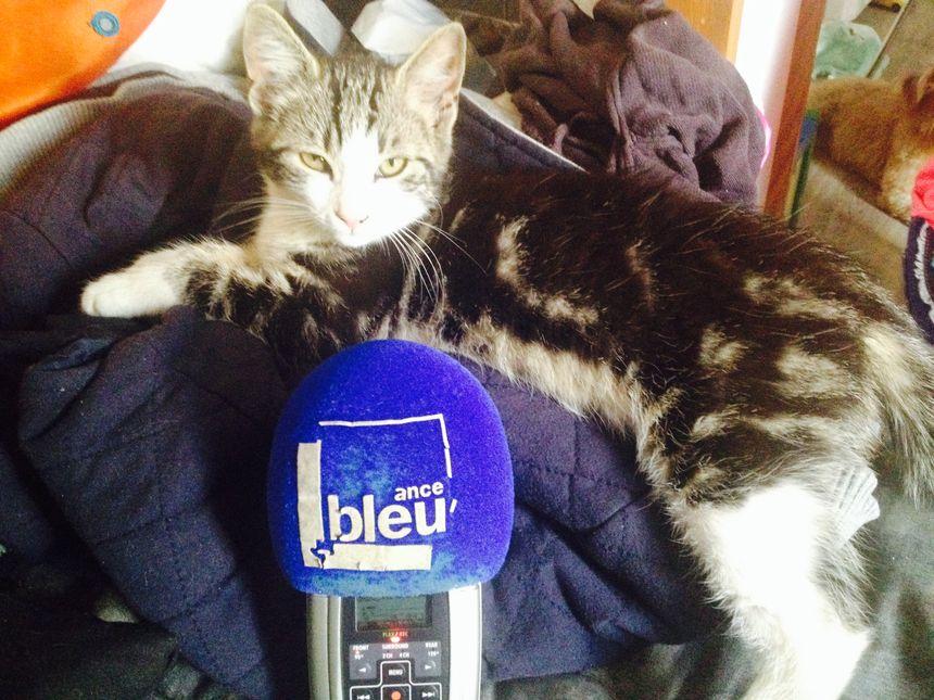 Appel aux auditeurs qui aiment les chatons mignons et câlins.