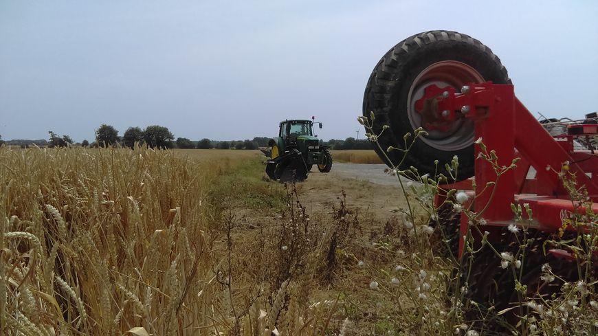 La sécheresse touche les champs de blé d'Issé, dans le nord de la Loire-Atlantique