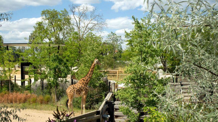Parc Zoologique de la ville de Paris (Zoo de Vincennes)