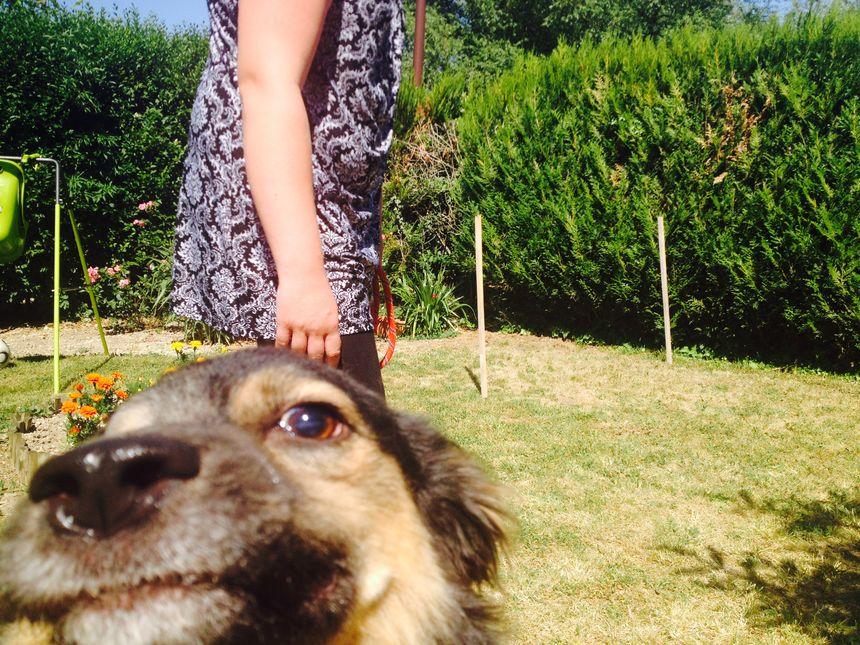 Rexy s'est fait soigner son oeil chez le vétérinaire, il attend maintenant son nouveau propriétaire.