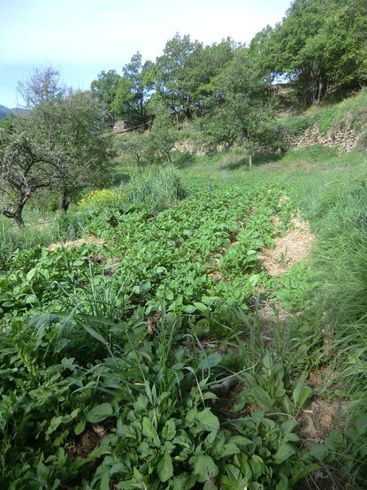 Plein champ, sous tunnel, on cultive Bio à Lou Champou