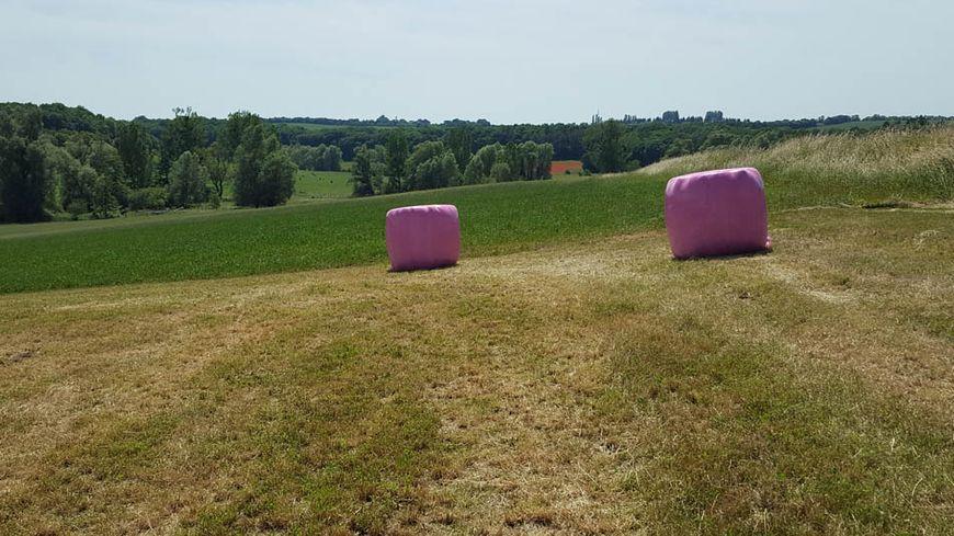 En alsace bossue des bottes de foin en rose pour la lutte contre le cancer - Une botte de foin ...