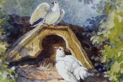 Les deux pigeons (Aquarelle d'Auguste Delierre)
