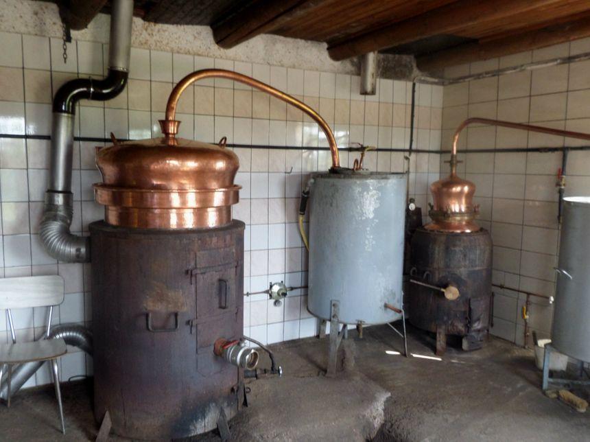 Les quelques producteurs à avoir eu une récolte distilleront cette année chez eux, à la ferme.