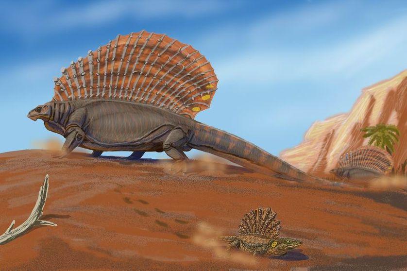 """L'édaphosaure, du genre des """"reptiles mammaliens"""", était un herbivore pouvant mesurer jusqu'à 3 mètres de long."""