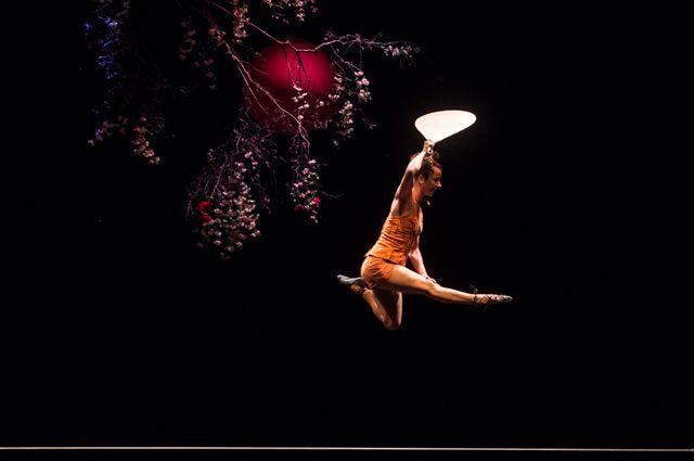 Crépuscule et fleurs de cerisier, la forêt du Cirque Plume rôle principale de leur dernier spectacle