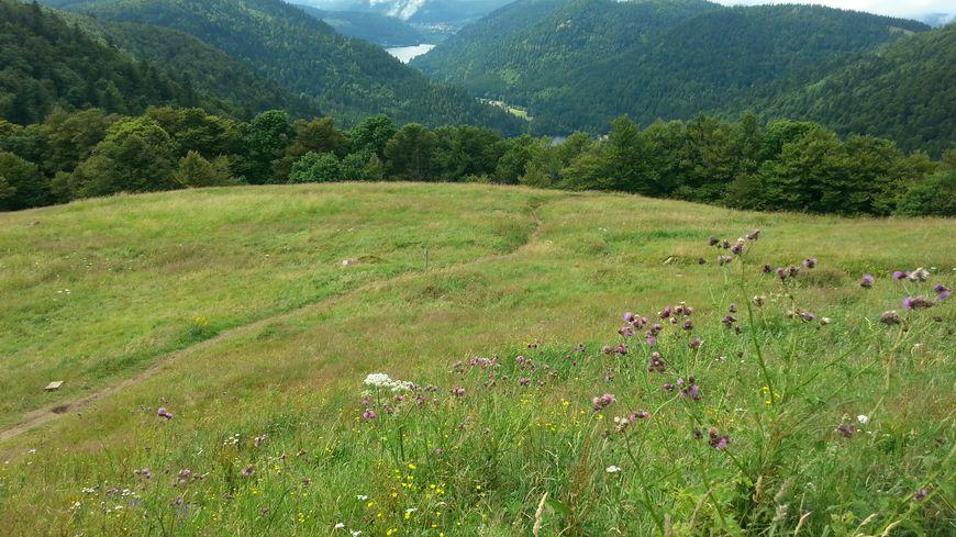 La route des Crêtes offre de beaux panoramas, à plus de 1.000 mètres d'altitude