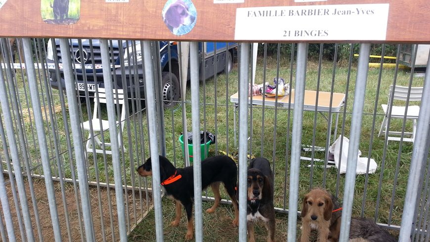 Plus de 500 chiens de chasse à admirer jusqu'à ce dimanche soir sur l'hippodrome de Vitteaux et Marcilly et Dracy