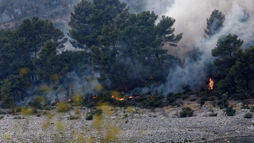 Il n'y a quasiment plus d'animaux dans le secteur brûlé dans le Luberon