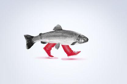 Boby Lapointe, le papa des poissons