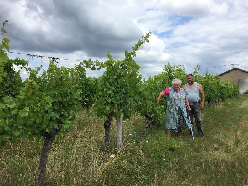 Jean-Philippe Cathal, du Domaine du petit Marsalet ne fera pas de vin cette année après l'épisode de gel ce printemps.