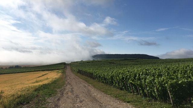 Le domaine de Plumecoq à Chouilly