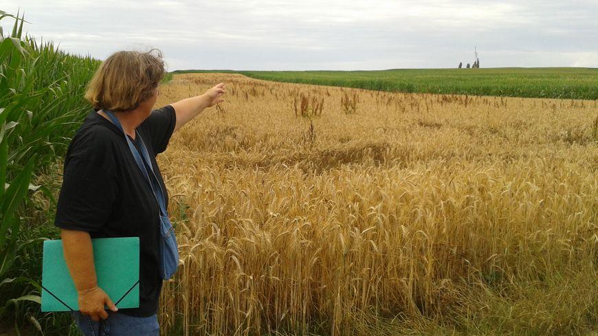 Annie Barth, agricultrice à Ittenheim, s'oppose aux fouilles d'archéologie préventive nécessaires à la construction du GCO.