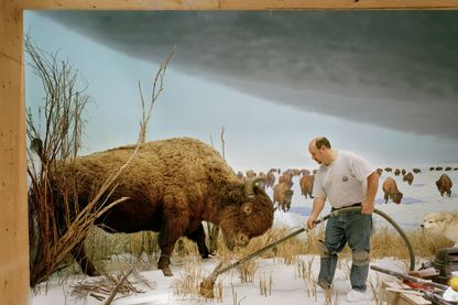 "L'exposition ""Dioramas"" au Palais de Tokyo à Paris. Photo de Richard Barnes, Man With Buffalo, 2007."