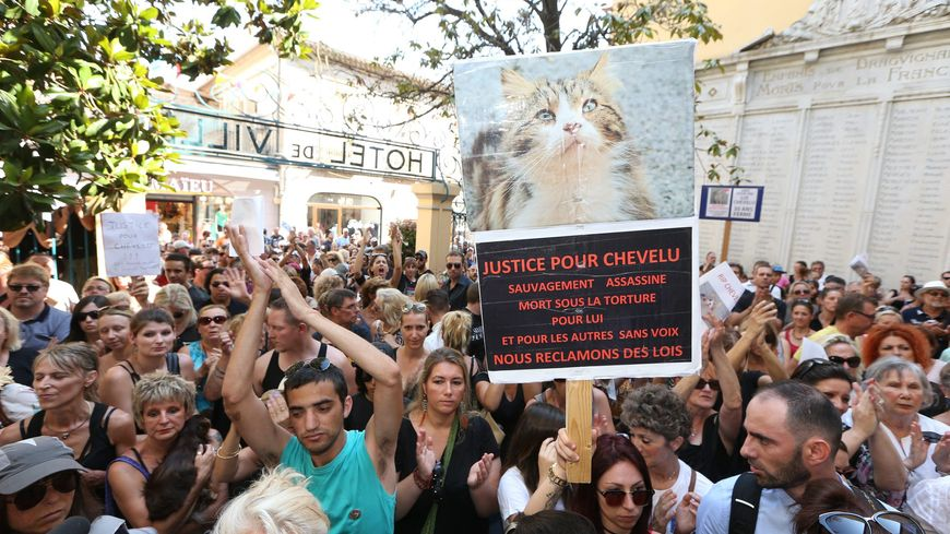 "Mobilisation des associations de protection animale pour réclamer justice pour ""Chevelu"""
