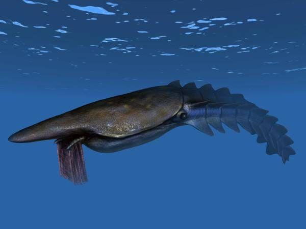 Le Hurdiidé planctonophage trémadocien Aegirocassis benmoulae, un représentant de la grande diversification ordovicienne.