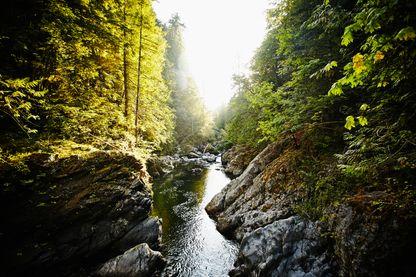 Sous l'Ancien Régime, le maître des eaux et forêts est une personne chargée de surveiller et de contrôler un territoire mis à disposition de ses habitants par le roi ou le seigneur.