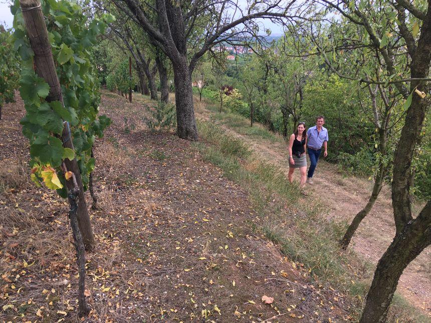 Le sentier viticole