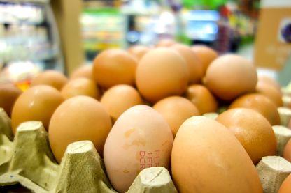 Plus de 200 000 œufs contaminés pourraient avoir été consommés en France