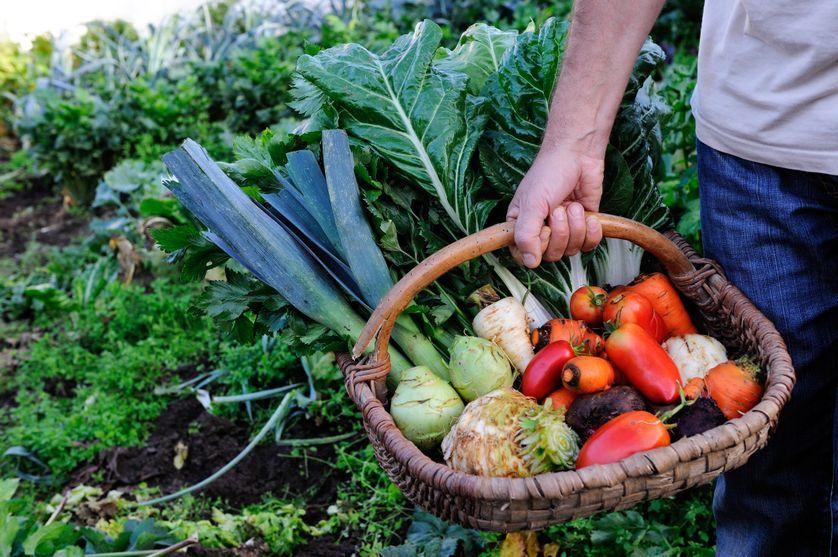Près de 6% des terres agricoles françaises sont en bio, en 2016.