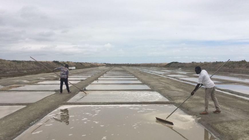 Abdoulaye Keita et Oumar Sylla tirent du sel sur un marais salant à Saint-Clément-des-Baleines