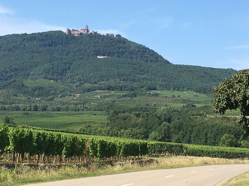 La Route des Vins et le Haut-Koenigsbourg