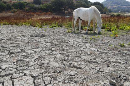Un cheval broute dans un champ sec près d'Ajaccio (Corse). En raison de la sécheresse, la préfecture de Haute-Corse a ordonné des mesures de restrictions d'eau avec effet immédiat pour tout l'été