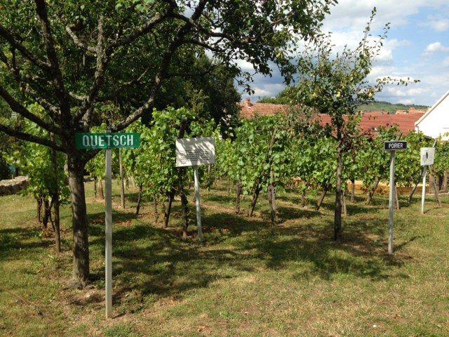 Le jardin des vignes d'Ammerschwihr