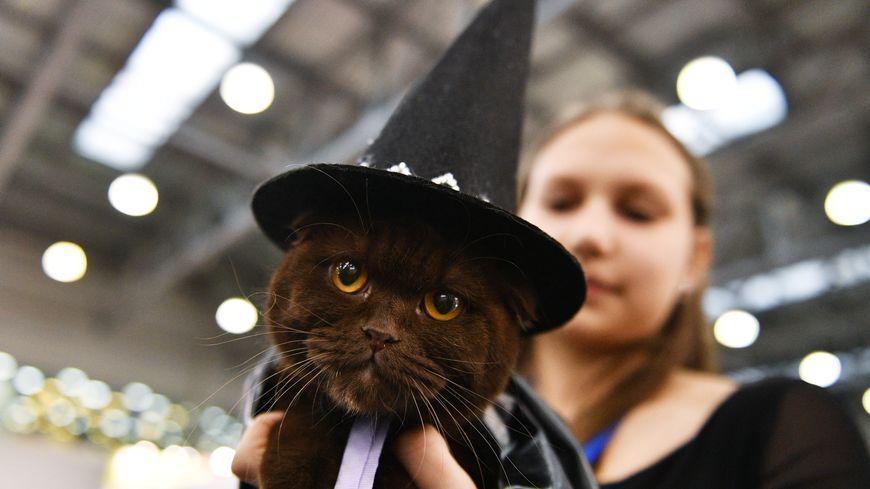 Le chat noir fait-il vraiment si peur ?
