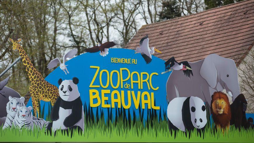 Le ZooParc de Beauval recrute pour préparer une fin d'année sans doute très animée