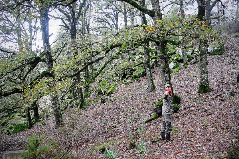 Je suis garde forestier
