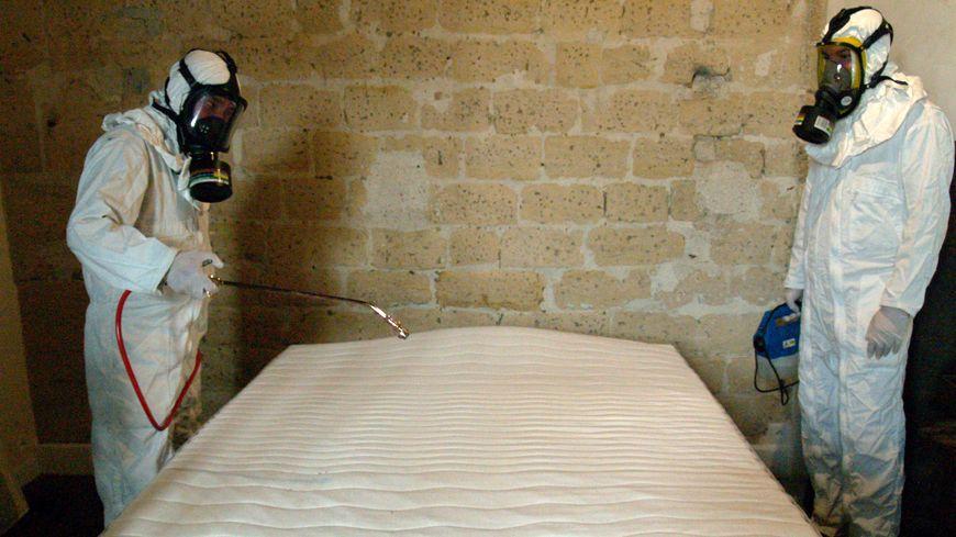 Opération d'extermination de punaises de lit (illustration)