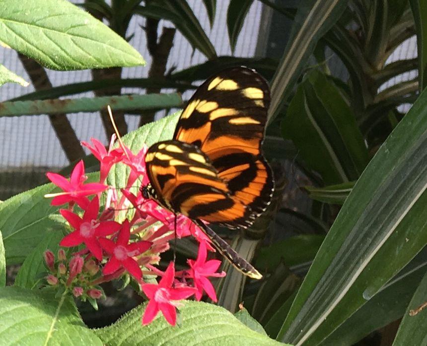 Un bien joli papillon