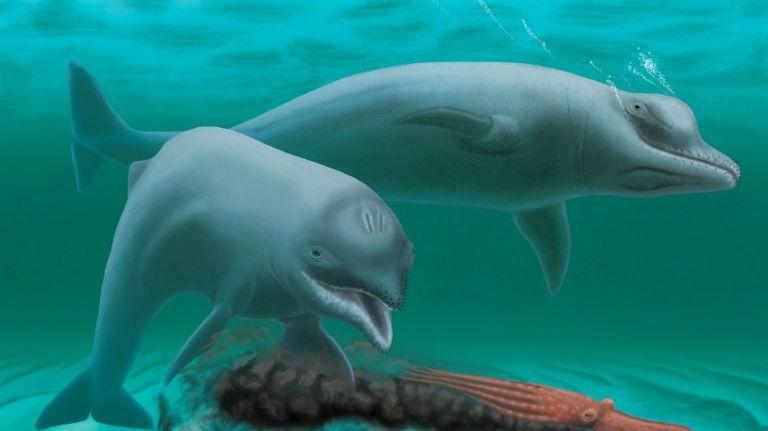 Un étrange dauphin, vieux d'environ 30 millions d'années, a été découvert aux Etats-Unis.