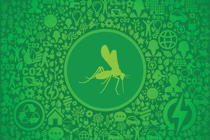 Le moustique et son environnement