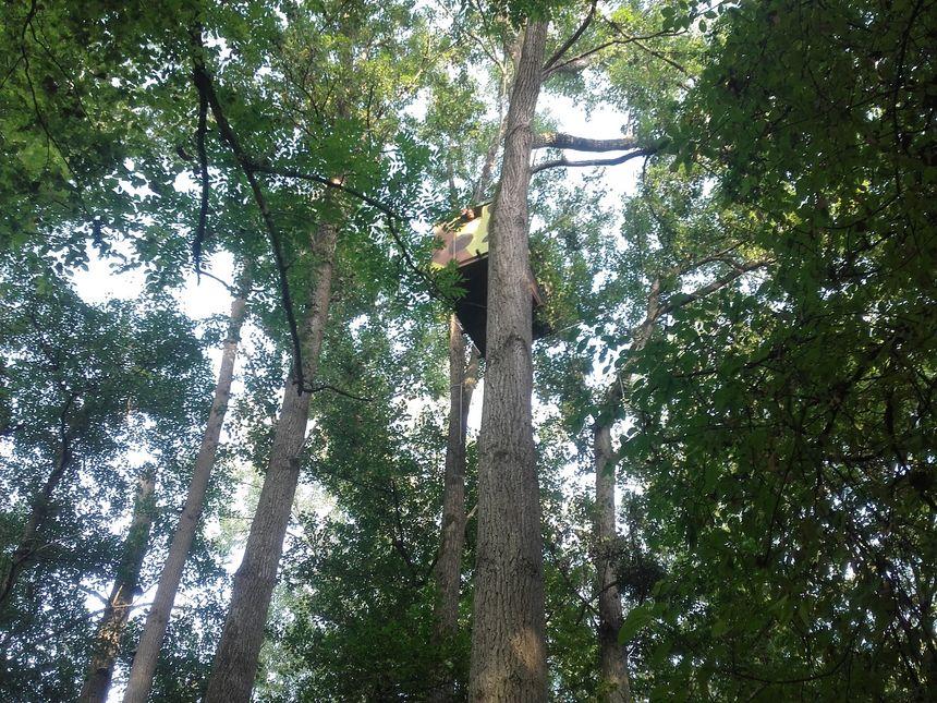 Une cabane dans les arbres contre le GCO (crédit photo : Bruno Dalpra/collectif GCO-non merci)