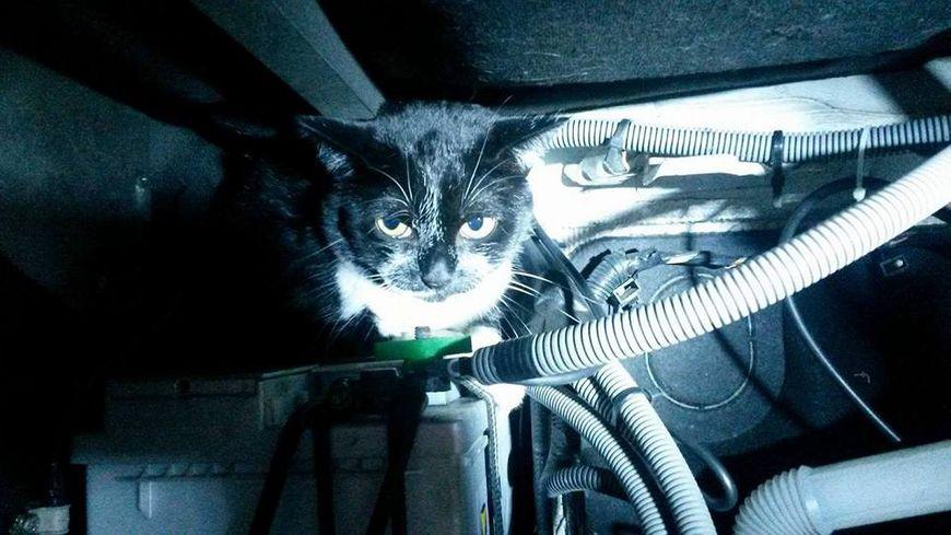Le chat Jazz caché dans le capot du camping-car des belges