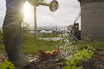 Cultiver son jardin...