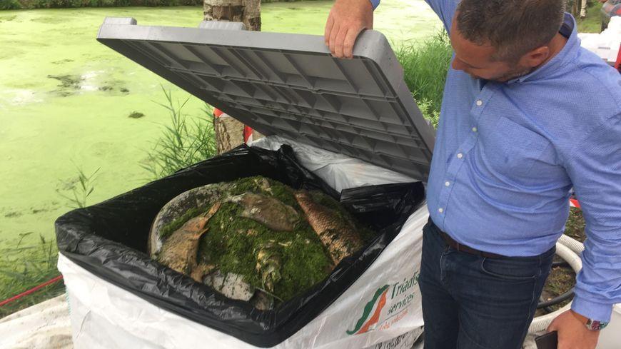 Les poissons morts avaient été stockés par centaines de kilos dans de grands bacs en plastique