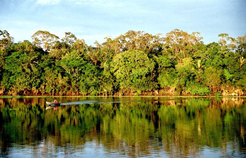 L'Amazonie couvre 5% de la surface terrestre mondiale. Est-elle plus que jamais en danger ?