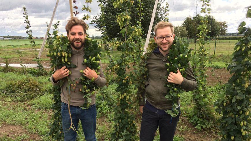 Edouard, 26 ans, et Marc, 29 ans, font revivre la culture du houblon