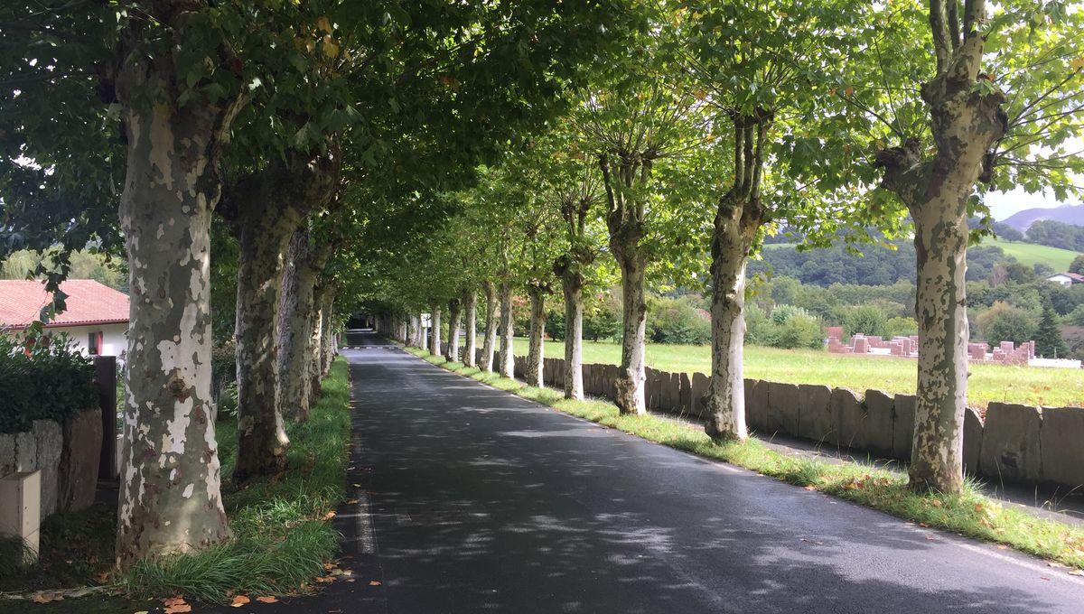 Fait Divers Saint Pee Sur Nivelle pays basque : accident mortel aux fêtes de sare