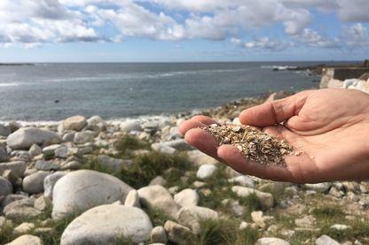 Le sable coquillier de la côte de granit rose en Bretagne