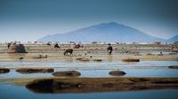 Les usages de la terre, Cosmopolitiques de la territorialité (suite) (8/9) : Les Chipayas de Bolivie