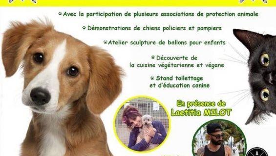 Envie D Adopter Un Chien Rendez Vous Au Parc Longchamp A Marseille Ce Samedi Apres Midi