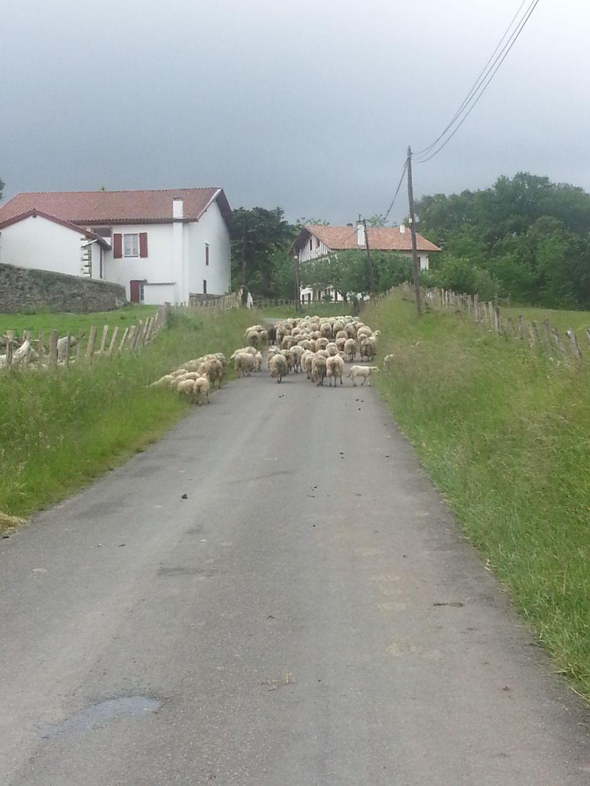 Les routes magnifiques et accidentées du Pays Basque réservent parfois quelques surprises