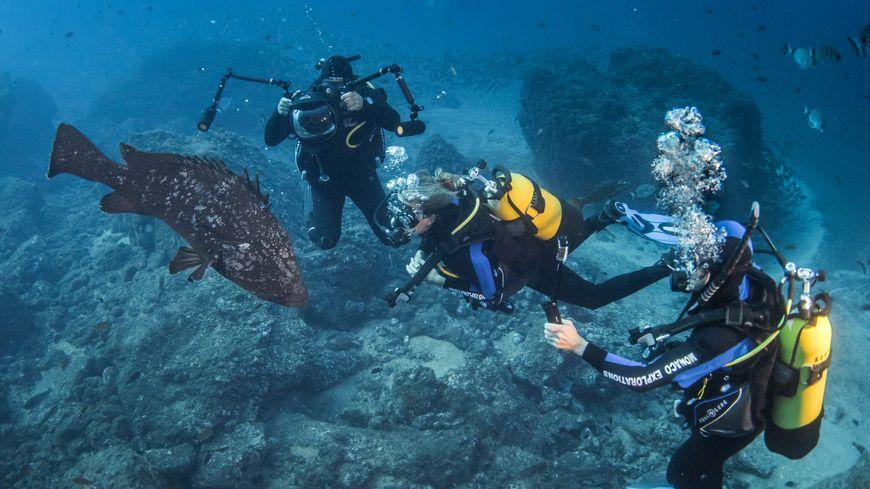 Equipe de plongeurs du bateau océanographique de Monaco